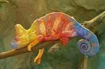 At skifte farve giver ikke modstand mod forandring for en kamæleon